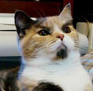 Schroedcat
